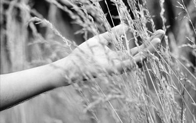 Découvrez l'incroyable vertu des caresses